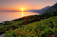 Local Wine Lover's Tour of the Peljesac Peninsula