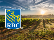 RBC Picnic in the Vineyard