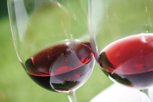 Pinot 101 at Brittan Vineyards